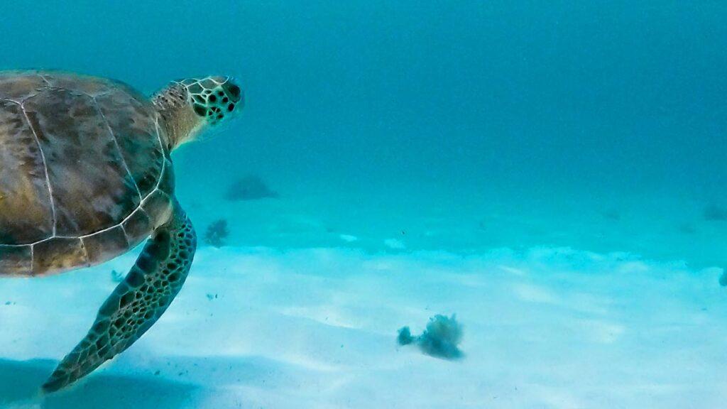 sea-turtle-coast