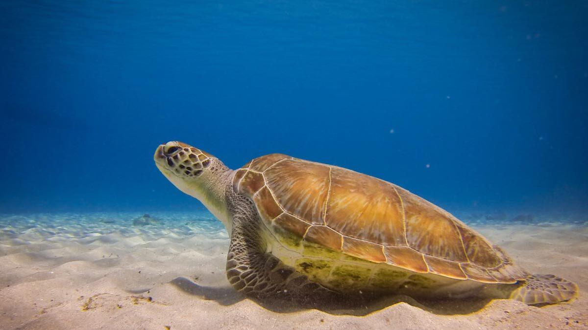 ocean-conservancy