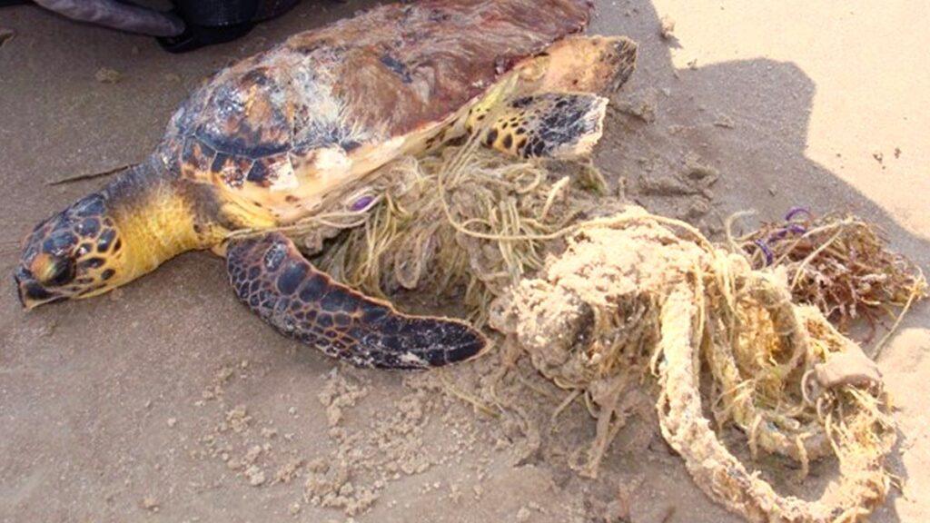 sea-turtle-stranding