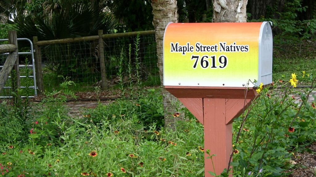maple-street-natives