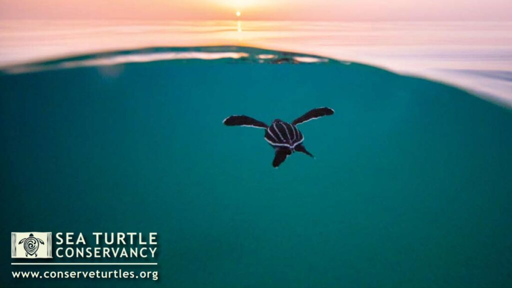 sea-turtles-conservancy-calendar-2021